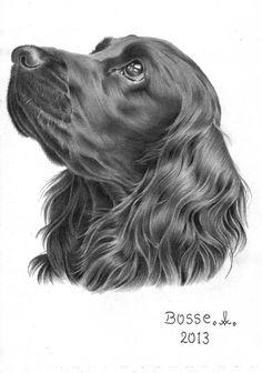 easy cocker spaniel drawings pencil - AT&T Yahoo Image Search Results Realistic Drawings, Cute Drawings, Pencil Drawings Of Animals, Dog Pencil Drawing, Drawing Art, Pencil Art, Dog Memorial Tattoos, Black Cocker Spaniel, Dog Artwork
