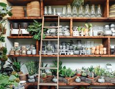 Climbing up the ladder to find hidden treasures (and water the stock plants, of course! Retail Display Cases, Garden Center Displays, Modern Home Offices, Tree Shop, Flower Studio, Shop Layout, Garden Shop, Plant Nursery, Coffee Design