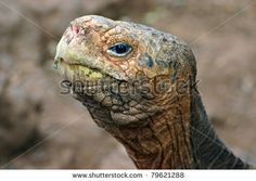 Tortoise Head. Reference