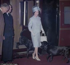 The TV adventurer claimed that the Queen keeps her band of labradors hidden out of public eye at Sandringham, in Norfolk, but has up to 20 of them and even made special adaptations to a fleet of Land Rovers to accommodate them. Pictured, the Queen with two labradors on leads returning from a holiday at Balmoral Castle
