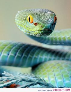 Snake Photos | FUNNY PICTURES