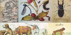 La Biblioteca Histórica de la Universidad Complutense de Madrid acoge la exposición 'Biblioteca y gabinete de curiosidades, una relación zoológica', que reúne de forma excepcional más de 50 manuscritos y libros ilustrados con representaciones zoológicas junto con los referentes animales que sirvieron de modelo a los artistas. Se ha diseñado una exposición virtual y se ha editado un catálogo disponible a texto completo en formato pdf.