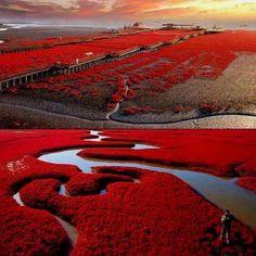 Red Beach in Panjin,China Please Follow:- +Wonderful World