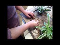 Explication détaillée en vidéo d un mur végétal intérieur et extérieur