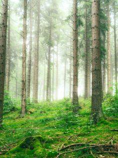 Soul Forest by Preßmann