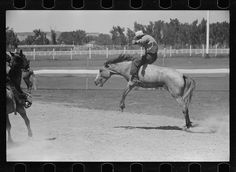 Riding a Bucking Horse, Miles City, MT, 1939
