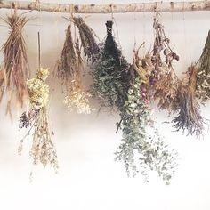Dried flowers from Terrain's visit to Studio Choo.