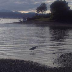 Liberty Bay, Poulsbo, Washington