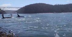 Όταν είδε την θάλασσα να αφρίζει άρπαξε αμέσως την κάμερα. Αυτό που κατέγραψε θα σας αφήσει με το στόμα ανοιχτό!  #Βίντεο