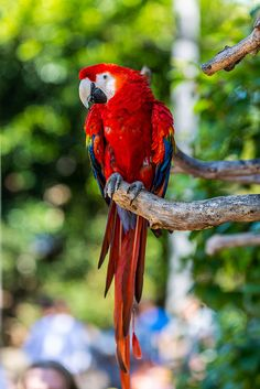 Macaw by J Michel Photos, via Flickr
