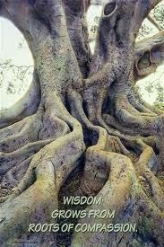 Roots of compassion.