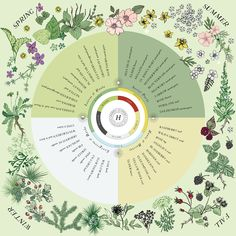 This seasonal foraging poster serves as a handy reference of common wild plants to forage and corresponding seasonal energetic for the year.