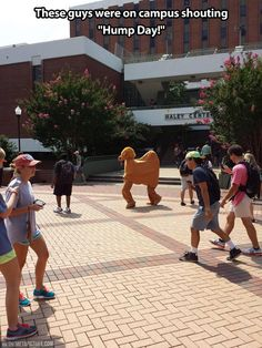 Hump day on campus…