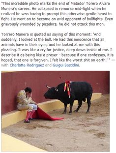 End Animal Cruelty - End Bull Fighting Animals And Pets, Funny Animals, Cute Animals, Touching Stories, Faith In Humanity Restored, Stop Animal Cruelty, Wtf Fun Facts, Memes, Animal Kingdom