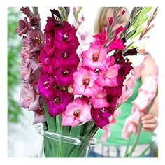 Pretty in Pink Gladiolus Mix Bulbs 10 by FreshGardenLiving on Etsy