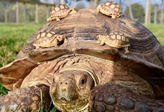 """Uživatel Animal Life na Twitteru: """"141-year-old mother and her 3-week-old babies... https://t.co/UXNzKVZaaR"""""""