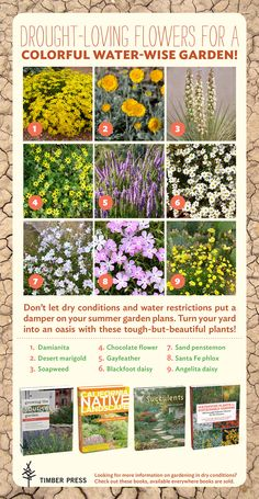 Don't let the drought ruin your summer gardening plans. These nine plants thrive in low-water conditions.