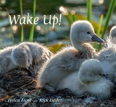 Wake Up! By Helen Frost and Rick Lieder Simple poetic language and close-up photographs invite readers to explore all the baby animals who are born during spring. Toddler Storytime, American Poetry, National Poetry Month, Spring Books, New Children's Books, Award Winning Books, Preschool Books, In The Tree, New Pictures