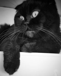 Evlat 😎 ismi pofuduk 🙀 😂 kendisi buzdolabı üstünde vakit geçirmeyi çok seviyor. 😂😂 #catlovers #cats #bw #blackwhite My Photo Album, My Photos, Cats, Animals, Gatos, Animales, Animaux, Animal, Cat