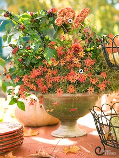 Fall Container - An airy mass of long-blooming coreopsis 'Mango Punch' combines with matching chrysanthemums and a few berried spikes of ornamental black pepper in a footed urn.  A. Coreopsis 'Mango Punch'  B. Chrysanthemums  C. Ornamental black pepper
