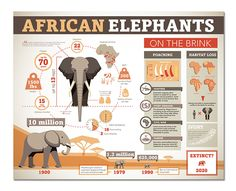 Proposed infographics for Point Defiance Zoo & Aquarium. Zoo Signage, Wayfinding Signs, Signage Design, African Elephant Facts, Endangered Elephants, Field Guide, Illustrations And Posters, Animal Design, Zoo Animals