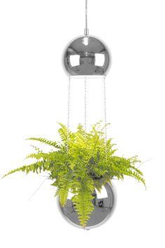 Small Pendant lamp Planter  Material: Chrome Cable: Transperent High 60 cm Diameter 18 cm Lampholder E14 Max 40W L190 Design: Anna Andersson