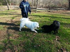 Taking Oreo to the Dog Park in Southbury CT