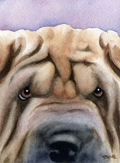 SHAR PEI Dog Watercolor Art Print Signed by Artist DJR. $12.50, via Etsy.