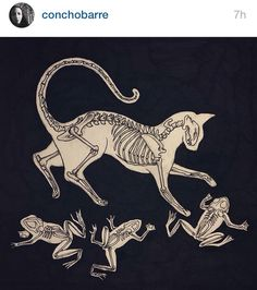 Cat and frog skeleton tattoo