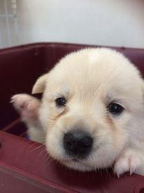 里親さんブログ預かり犬てんちゃん - http://iyaiya.jp/cat/archives/71474
