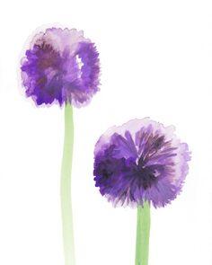 Botany 2: Allium Watercolor Flowers Art Print
