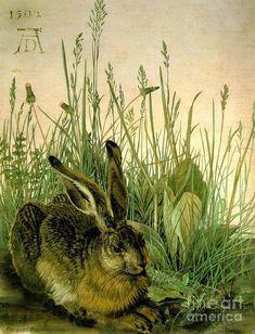 Abrecht Durer Composite Hare in Weeds 1502 by Pierpont Bay Archives Hare Today Gone Tomorrow, New Fine Arts, Italian Renaissance Art, Rabbit Art, Albrecht Durer, Gardening, Fine Art Prints, Art Gallery, Digital Art