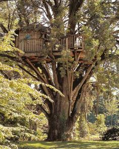Pictures of Tree Houses and Play Houses From Around The World, Plans And Build Tips, Guides, Ideas and How To's Outside Playhouse, Build A Playhouse, Picture Tree, Cool Tree Houses, Tree Tops, In The Tree, The Ranch, Play Houses, The Great Outdoors