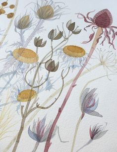 """Angie Lewin """"Cone Flower with Spanish Seedheads"""" (detail) - one of the watercolours forming part of 'A Natural Selection', an exhibition of Angie's paintings at The Scottish Gallery, Edinburgh, from 1-30 May 2015 http://www.angielewin.co.uk/pages/exhibitions"""