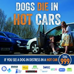 """Every year dogs die in hot cars. Don't take the risk with your dog, even if you """"won't be long"""". If you see a dog in distress in a hot car, dial Summer Safety, Dog Died, In Distress, Amazing Pics, Criminal Minds, Hot Cars, Animal Pictures, Your Dog, Monster Trucks"""
