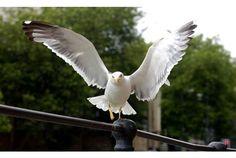 Lazy, Bird, Animals, Image, Animales, Animaux, Birds, Animal, Animais