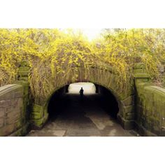 A jogger runs under a bridge covered with forsythia inside New York City's Central Park.  http://m.mnn.com/earth-matters/climate-weather/photos/early-spring-scenes-of-2012/a-nice-day-for-a-jog