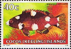 Cocos Keeling Islands 1979 Fishes SG 43 Coral Hogfish Fine Mint Scott 45  Other Cocos Keeling Island Stamps HERE