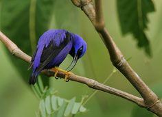 Purple Dreamy: Birds