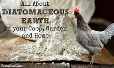 Fresh Eggs Daily®: All about Diatomaceous Earth - In your Coop, Garden and Home