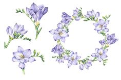 Set of Watercolor Freesia Flowers - Illustrations - 3