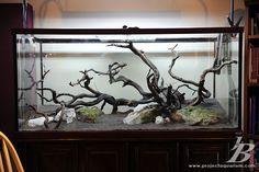 180 Gallon Cardinal Tetra Tank - APE - Aquatic Plant Enthusiasts | A Planted Aquarium Community
