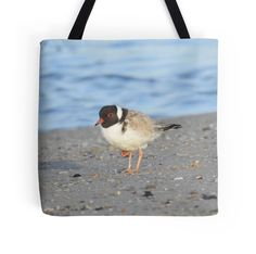 Adult Hooded Plover by BirdBags Small & Large