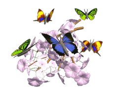 Butterflies are Free... ...and so are these highly-recommended links to Free healing, Free courses, Free streaming television, Free guided meditations, Free music, and so on. Free Meditation was de...