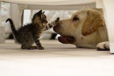 Alto ahí! Debajo de la cama termina tu mundo ;-)