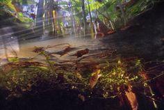 Underwater-in-Floridas-Swamps-04-685x460