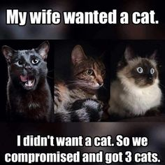 Yeah, me too, except…swap that to my husband wanted cats…