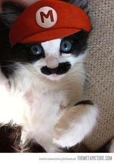 Google Image Result for http://static.themetapicture.com/media/funny-cat-Mario-moustache-costume.jpg