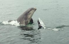 Why now take a trip on the Seafari from Elie and see some of the Forth's amazing wildlife. It will be a day to remember