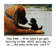 #cat #boss #dog #cute